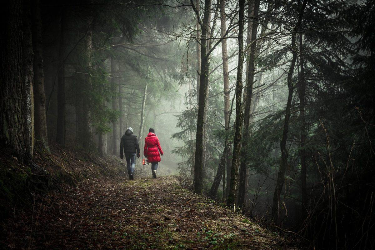 rychlá chůze v lese