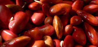 Klíčené luštěniny – ozvláštňující a nenahraditelný prvek ve zdravé výživě