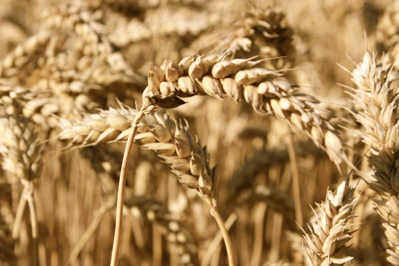 Obiloviny jako perfektní zdroj sacharidů: pohanka, jáhly, kuskus, špalda