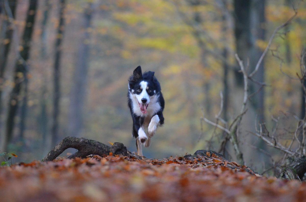 Podzim – prožitky – běhání