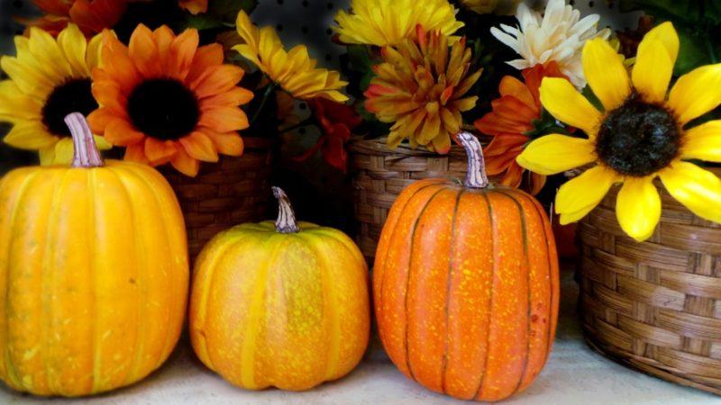 Výživa běžce (kalorie, makroživiny), 1. díl + tipy na podzimní jídelníček