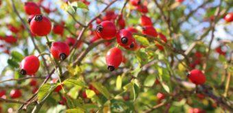 Výživa běžce (mikroživiny), 2. díl + tipy na podzimní jídelníček