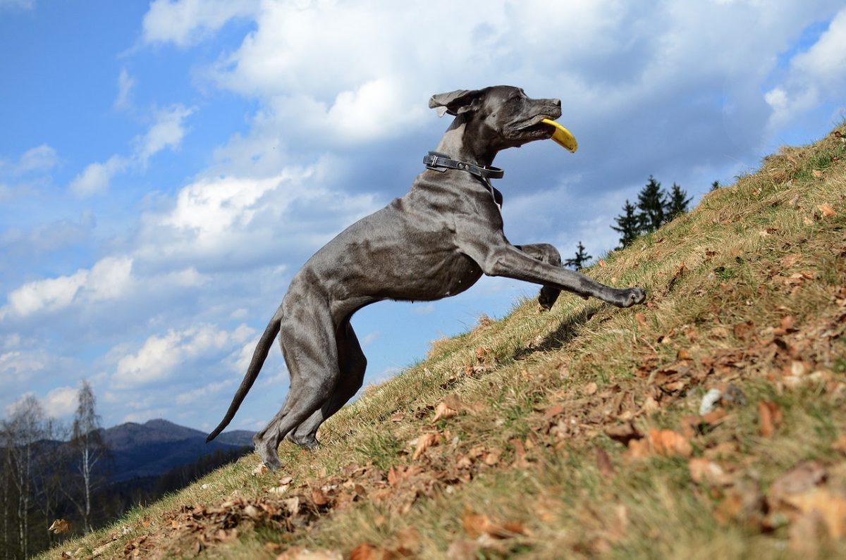 Běh do kopce vtipný obrázek pes s aportem