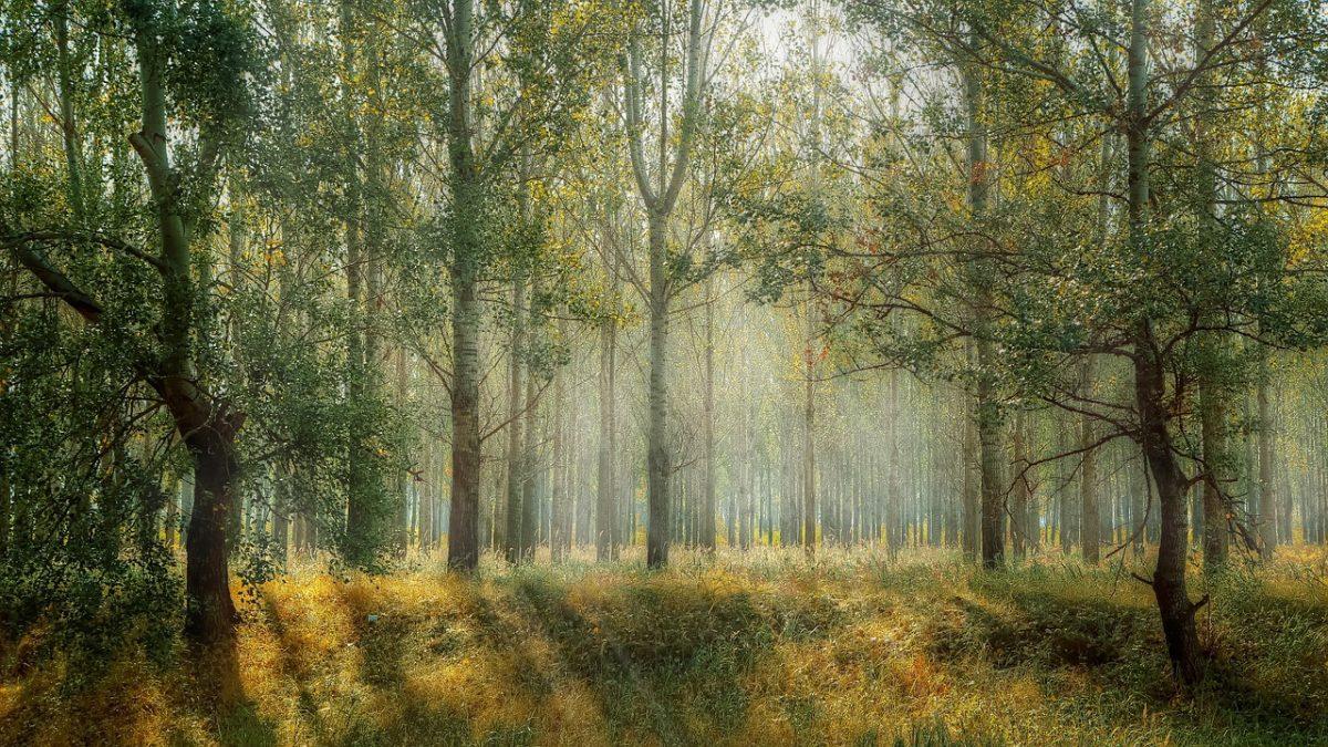 regenerace procházky v lese