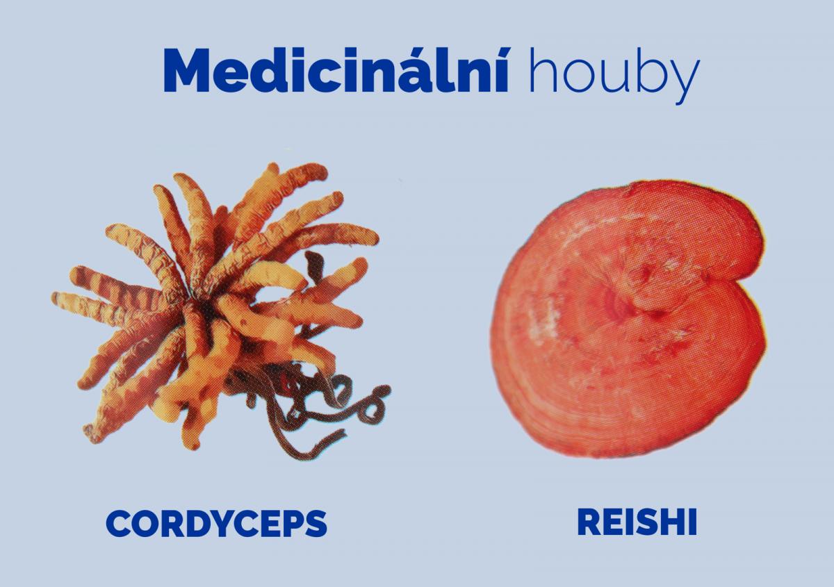 Rozhovor: Medicinální houby Reishi a Cordyceps se používají již tisíce let